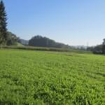 Unterwegs Richtung Grünenmatt